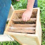 Die Bienen ziehen in Högering ein