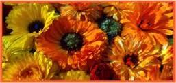 Felgers Blütensonne