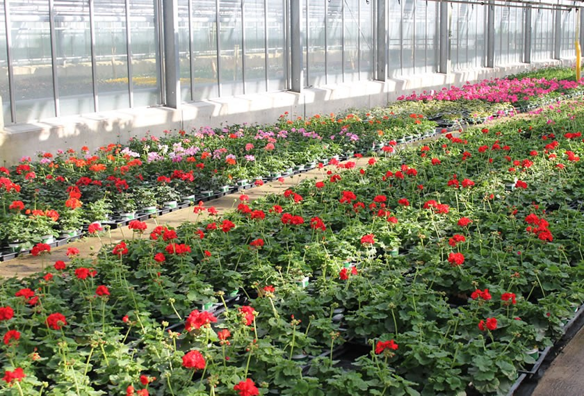 Erwerbs-Gartenbau