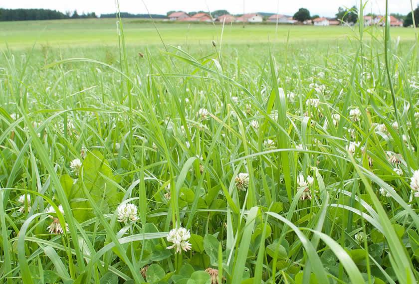 Effektive Mikroorganismen-Dauergrünland