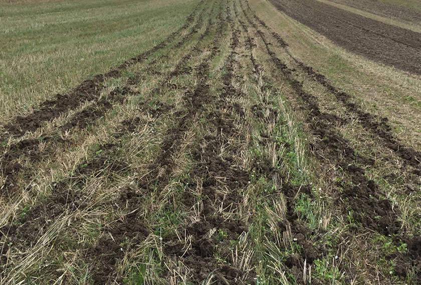 Bodenbearbeitung Regenerative Landwirtschaft