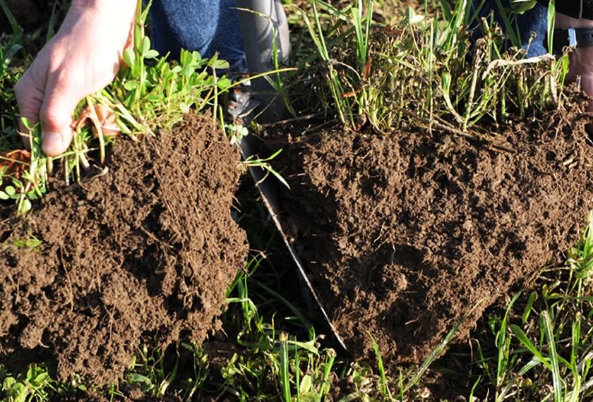Bodenprobe-begüllt und unbegüllt-im-Vergleich