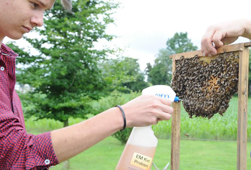 Bienenhaltung mit EM | Chiemgau Agrar