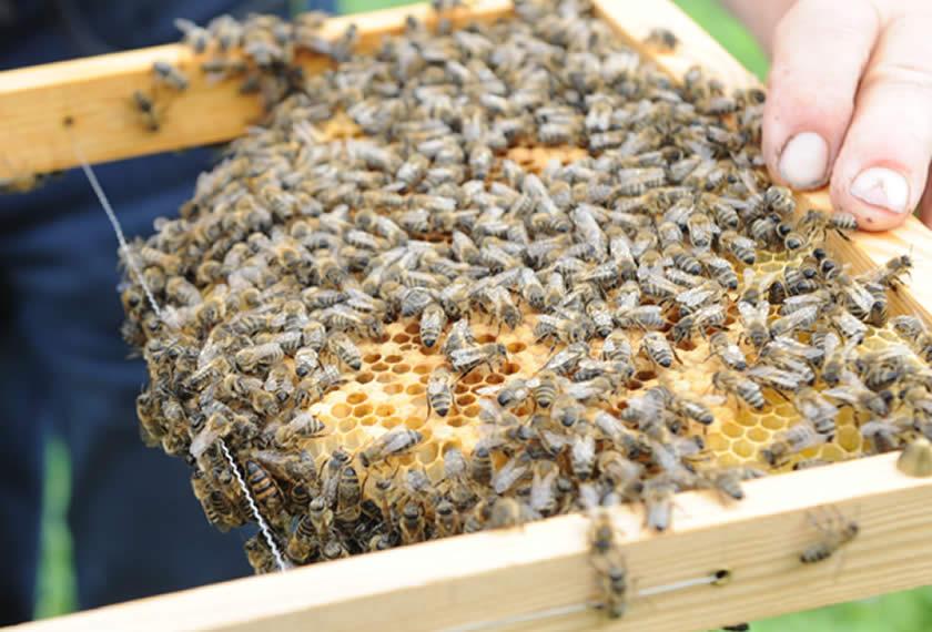 Bienenhaltung mit EM 2 | Chiemgau Agrar