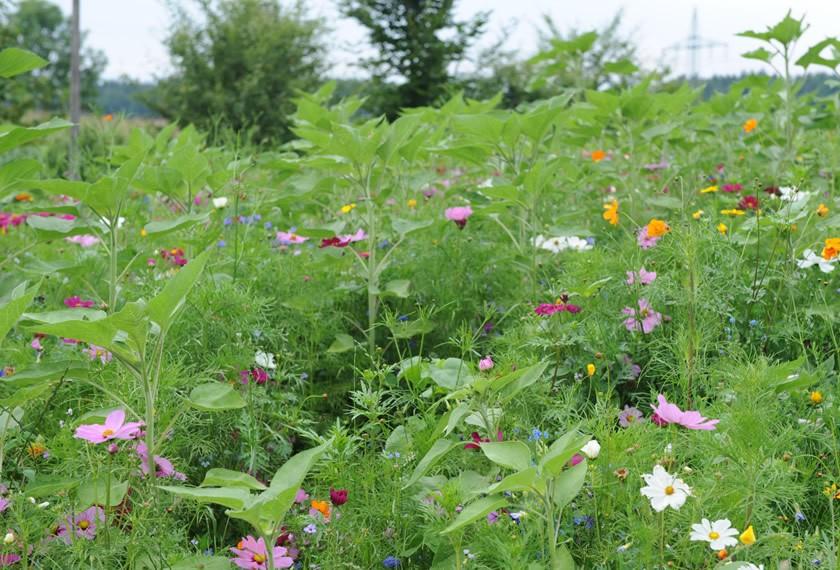 Bienennahrung Blüten | Chiemgau Agrar