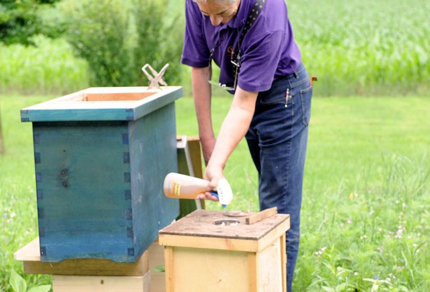 Bienenhaltung mit EM Sprühen | Chiemgau Agrar