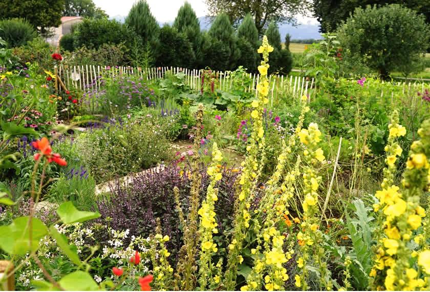 Bienennahrung mit EM 2 | Chiemgau Agrar