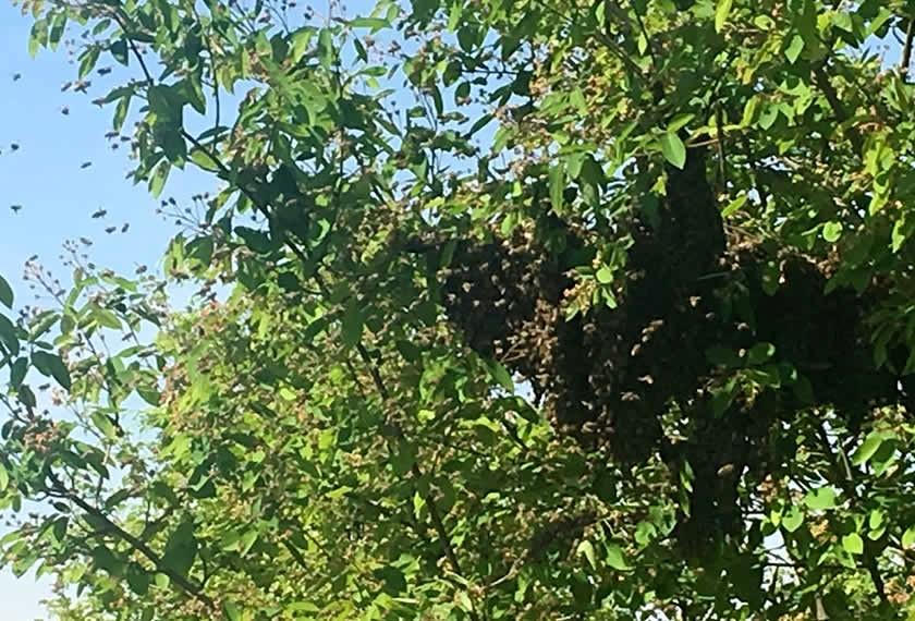 Bienenflug | Chiemgau Agrar
