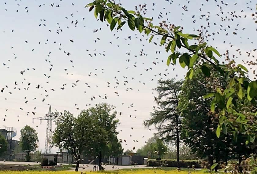 Bienenhaltung Deutschland | Chiemgau Agrar