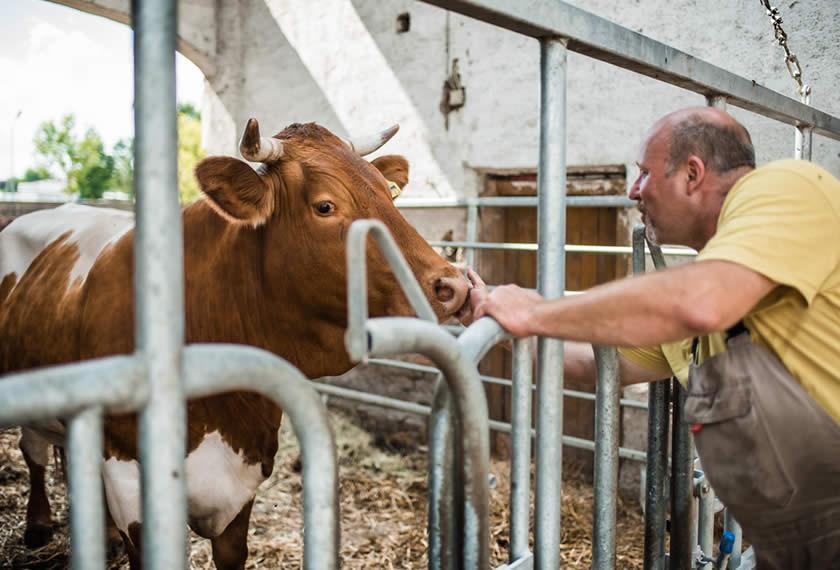 Tiergesundheit-Bartl-Gamml-EM-Chiemgau