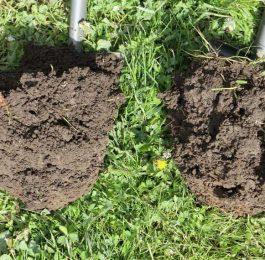 Bodenprobe Humusaufbau