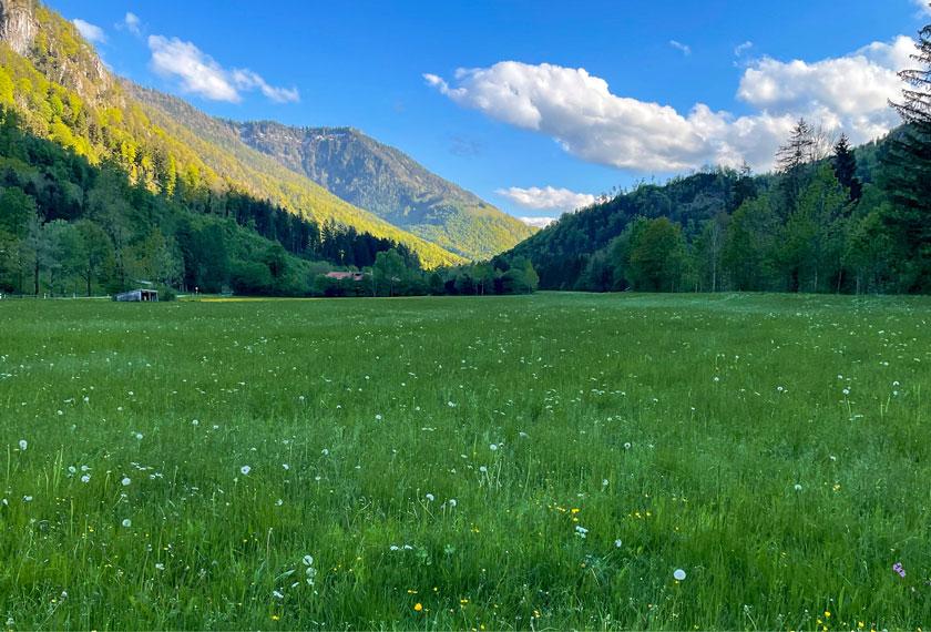 Gutes-Heu-Grummet-Milchkuehe_Wiesenbearbeiung beim rosenheimer Projekt führt zu Verbesserung des Grasbestandes und für bessere Futterqualtität