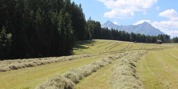 EM-Heu mit CFKE Heu aufwerten und gute Qualtität auch für Pferde einfahrenEM-Heu nach dem Rosenheimer Projekt