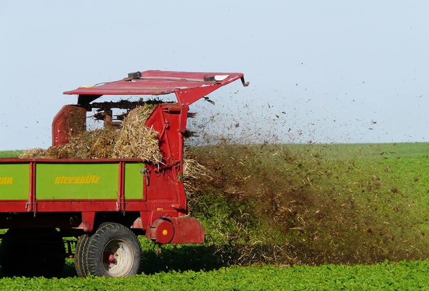 Mist-streuen-EM-Behandelt-Gesteinsmehl-und Pflanzenkohle