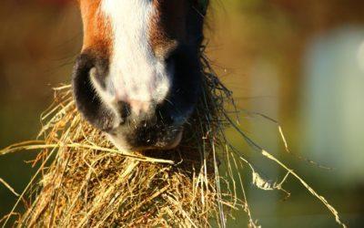 CFKE bei der Heuwerbung für Pferde verwenden, um staubfreies und gutes Heu zu gewinnen